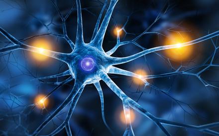 Was passiert wenn Tryptophan, Serotonin und Zink fehlen?